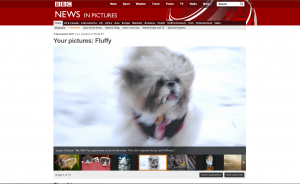 Layla Featured in the BBC's News in Pictures section